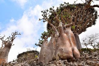 ソコトラ島の画像 p1_26